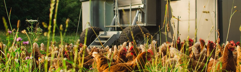 When chickens roam and move and data exchange runs via an integrated EDI interface