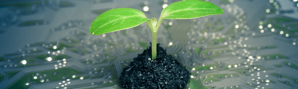 A raspberry Pi and a small plant - symbolic of companies that act environmentally friendly through the use of EDI.